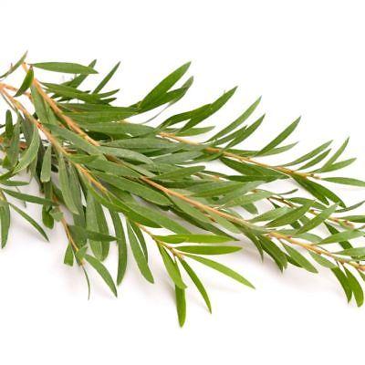 Αιθέριο έλαιο Tea Tree 15ml – Young Living