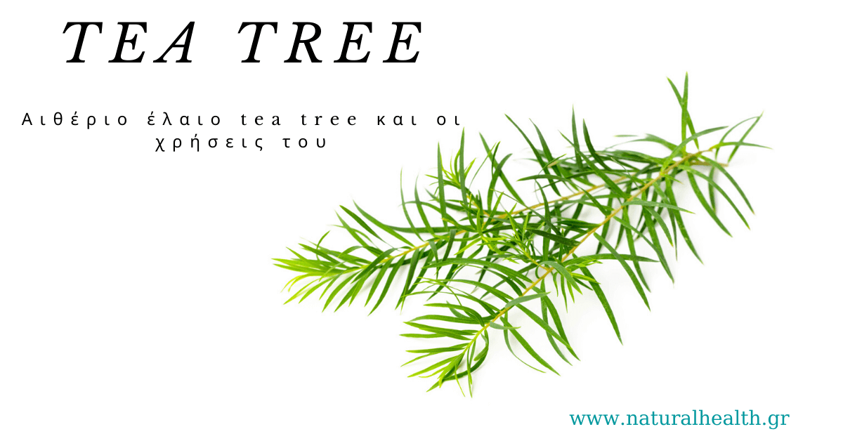 Αιθέριο έλαιο tea tree και οι χρήσεις του
