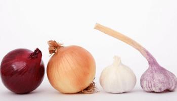 Βότανα για υποστήριξη των κιρσών